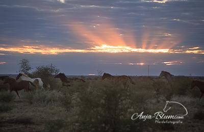 Reiter- und Pferdefotoreise Namibia