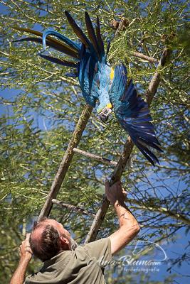 Papageienrettung Namibia