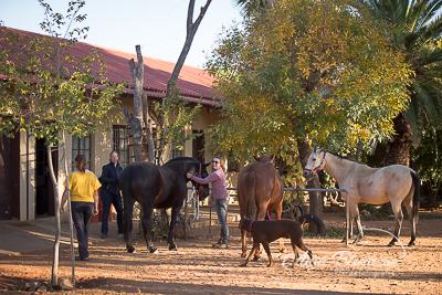 Pferde putzen namibia