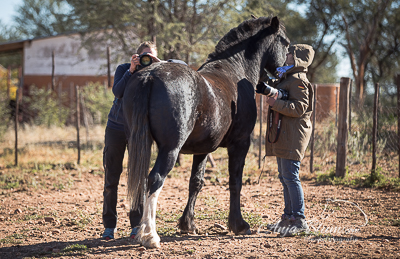 Pferdefotografie im Paddock Namibia