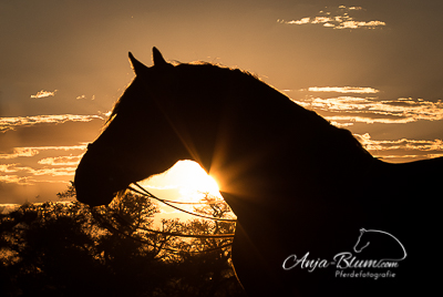 Pferdefotografie im Sonnenuntergang Namibia