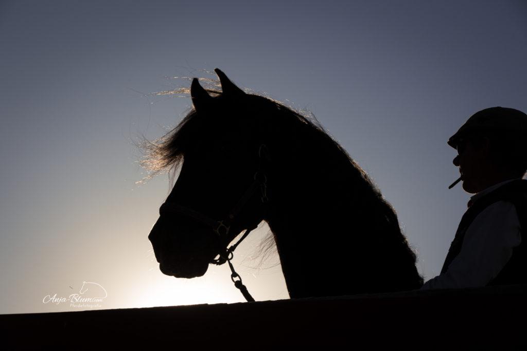 Anja Blum - Pferdefotografie
