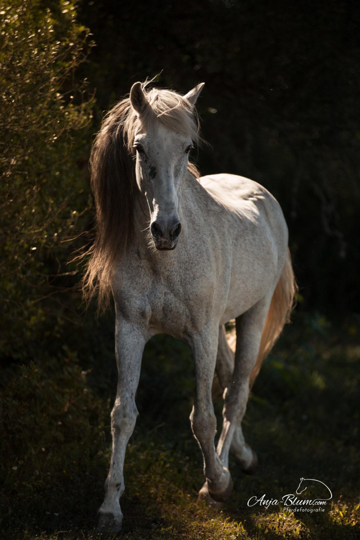 Pferdefotografie- und Reiterreise