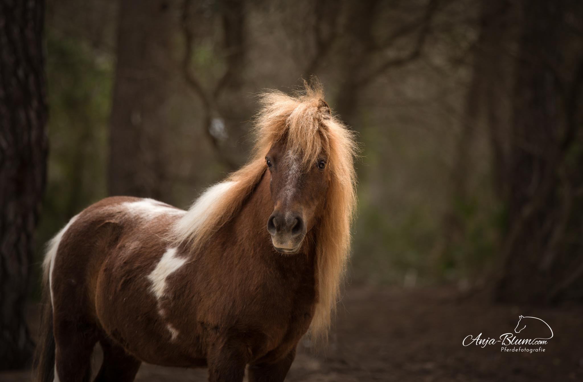 Pferde- und Reiterreise