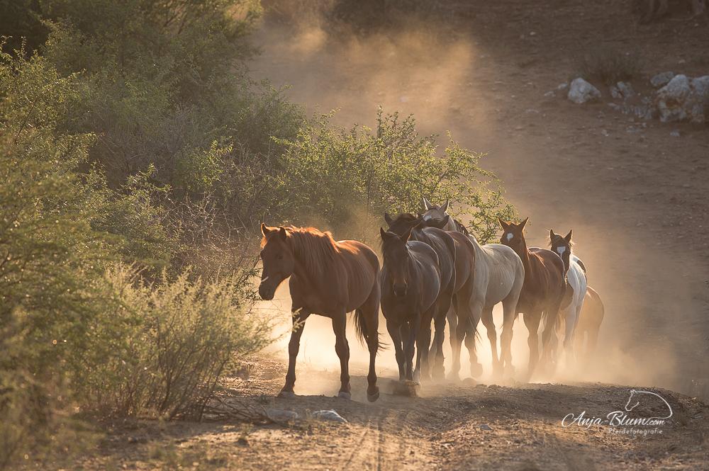 Anja Blum -Pferdefotografie
