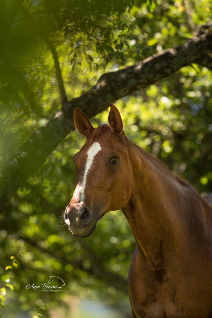 Portrait Intensiv Einzelcoaching Pferdefotografie