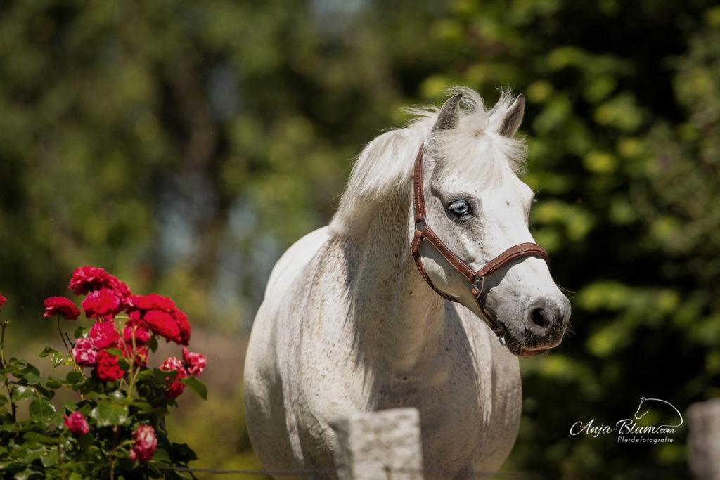Pony Einzelcoaching Pferdefotografie