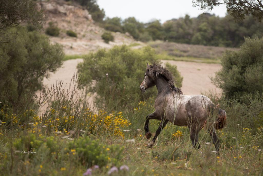 Reiter- und Pferdefotoreise