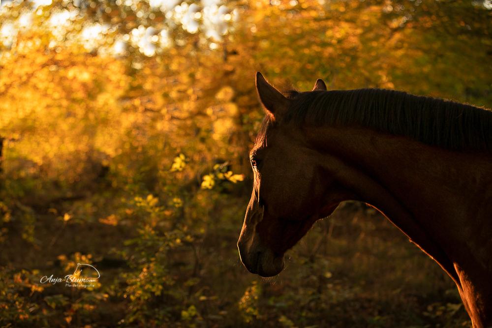 Superpferd bei Pferdefotografie