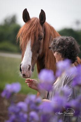 Pferdefotografie im Freien mit natürlicher Blumendekoration
