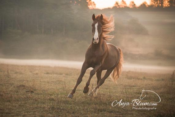 Pferdefotografie bei Nebel im Freien
